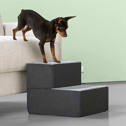 Top 10 Best Dog Stairs for Small Dogs in 2021 Reviews